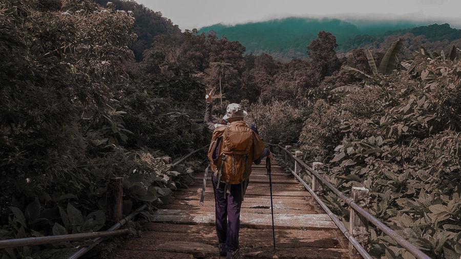 Rear view of woman walking on boardwalk amidst trees