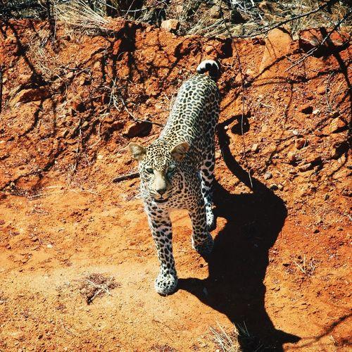 Animals Animal Portrait EyeEm Animal Lover Wildlife