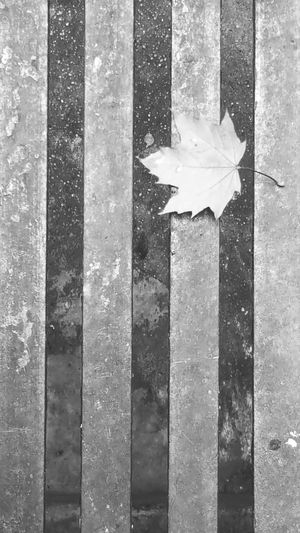 Just a leaf. Black And White Photography Monochrome Pattern Texture Leaf Odd Rule Of Thirds Galaxy Note 5 Project365