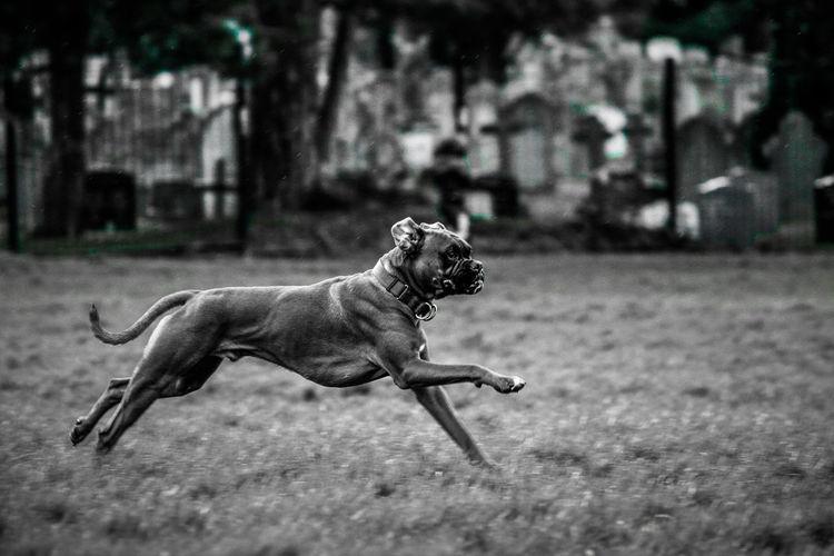 Pets Dog Animal Themes Close-up
