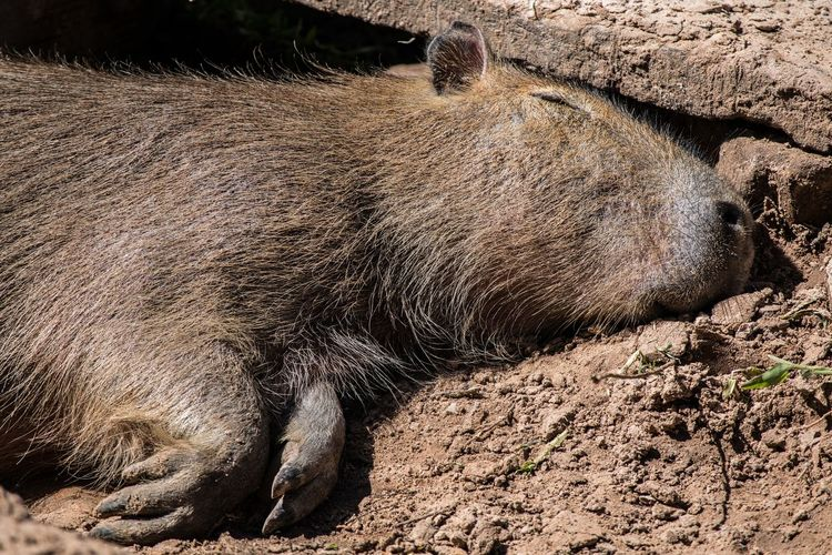 Close-up of an animal sleeping on field