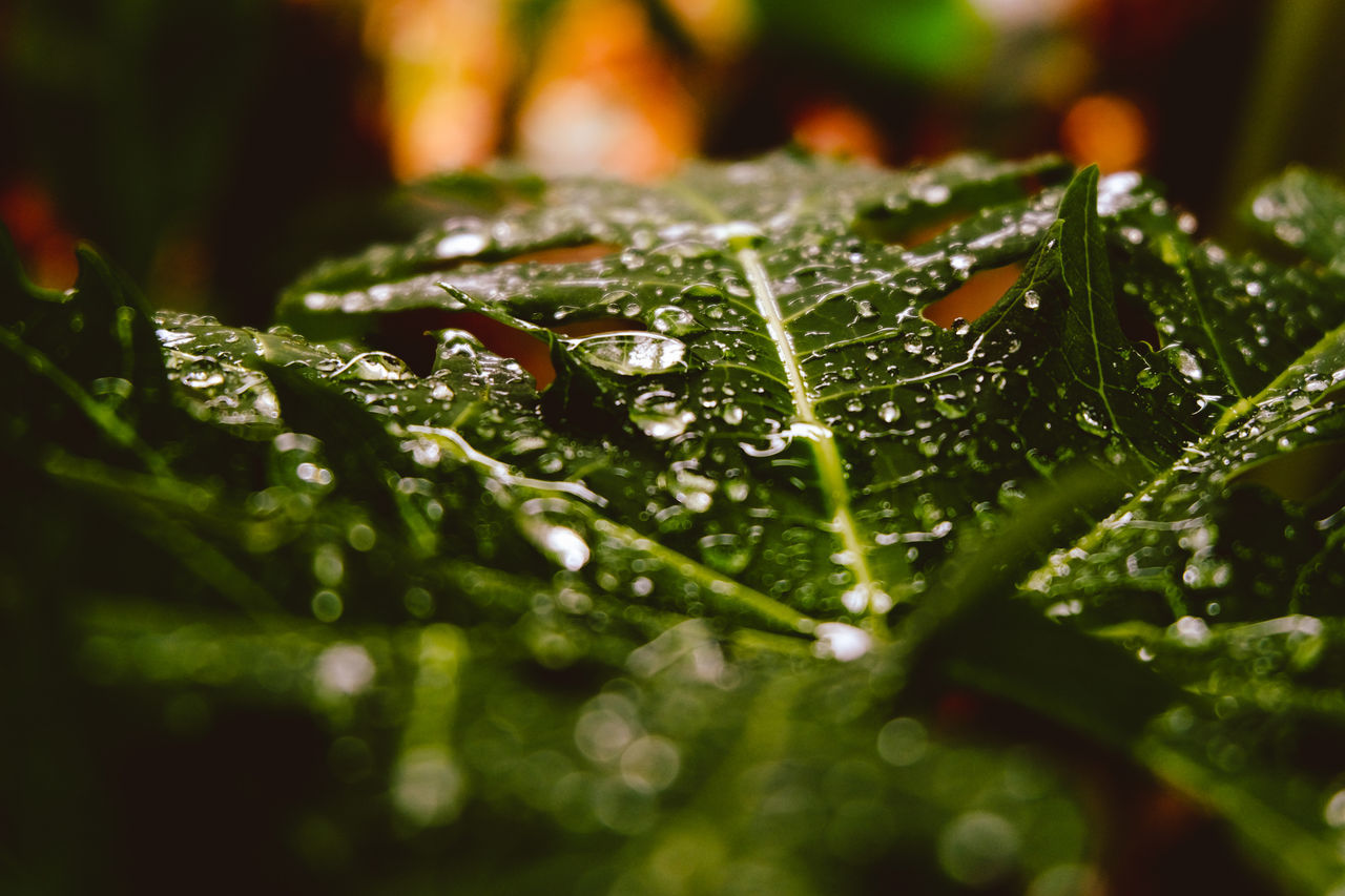drop, water, leaf, selective focus, nature, green color, wet, beauty in nature, close-up, no people, freshness, growth, raindrop, fragility, day, plant, outdoors