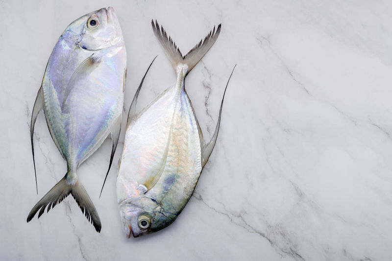 High angle view of fish hanging
