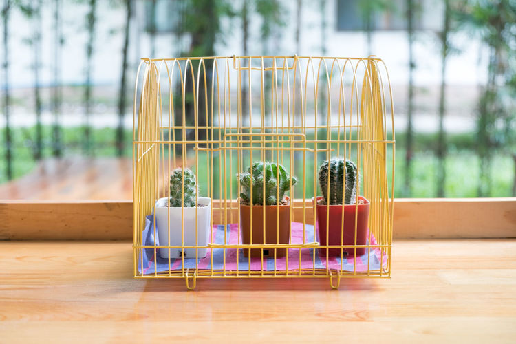 Indoors  No People Focus On Foreground Plant Hardwood Floor Wellbeing Table Day Still Life Nature Wood - Material Growth Container Wood Flooring Food Close-up Window Cage Flower Pot