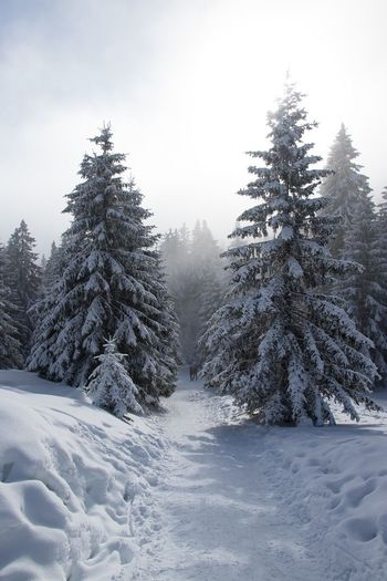 Snow Winter Cold Temperature Tree Landscape Scenics Nature Coniferous Tree Forest Sky Frozen Mountain Tranquil Scene No People Cloud - Sky Snowing Beauty In Nature Tranquility Day