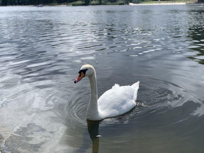 Hyde Park Water