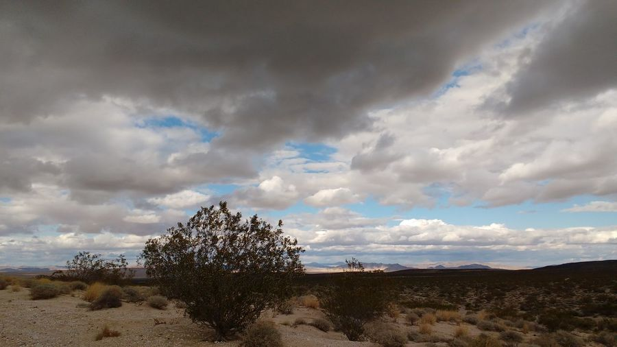 Lucerne Valley Wild West Desert Sky Cloud Clouds California Mountain Mountains Rocky Dirt Road Shrubs Trees Dark Dark Sky Dark Clouds Rainy Cloudy Cactus Flower Plant Cactus Desert Around The World Desert Beauty Nature_collection Outdoor Photography Tranquility No People Landscape Nature Outdoors