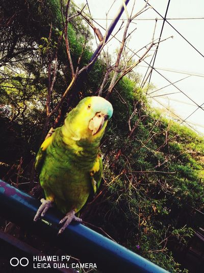 One Animal Bird Animal Themes Parrot Animal Wildlife Animals In The Wild Nature Day Beauty In Nature Animal Representation Green Color Pets Birdcage Domestic Animals Animals In Captivity Animals In The Wild Spring Protection