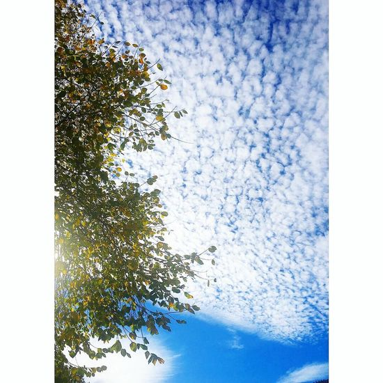 Pixelated Tree Blue Sky Close-up First Eyeem Photo