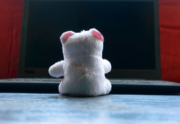 Close-up of white cat with toy