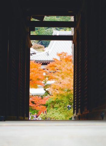 View from Houjyo. At Kamakura Engakuji of Japan. Dec 6,2015. Kamakura Japan Nature Photography Relaxing Enjoying The View Temples AW130