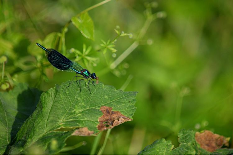Nikond3300 Narure_collection Landscape EyeEm Nature Lover EyeEm Best Shots - Landscape Couleurs Naturelles Landscape_Collection Landscape_photography EyeEm Nature Lover Libélule Animal Wildlife Animal Themes Animal Animals In The Wild One Animal Plant Part Leaf Green Color Insect Invertebrate Damselfly Nature Focus On Foreground Beauty In Nature Outdoors No People Plant Close-up Day Growth