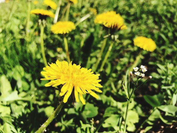 🌼🌿 Flower