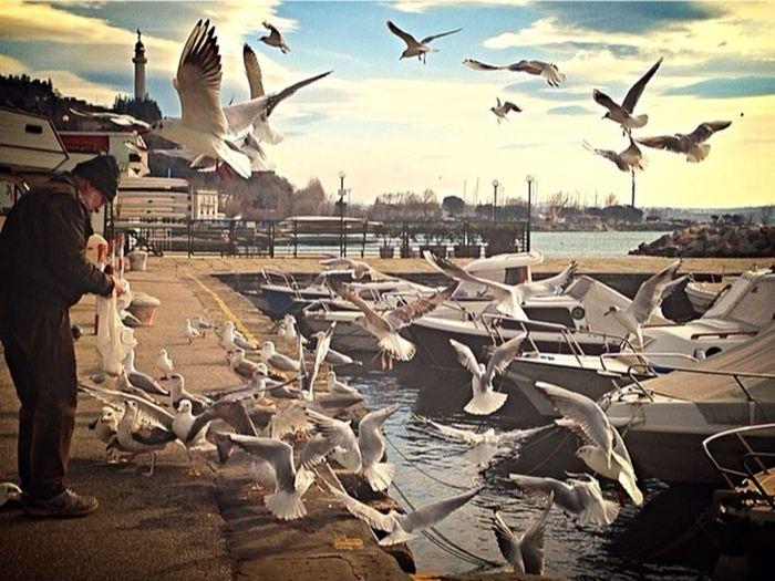 Briciole con il vento Trieste Birds Bird Hello World Street Photography EyeEm Enjoying Life On The Road Landscape_photography Friendship