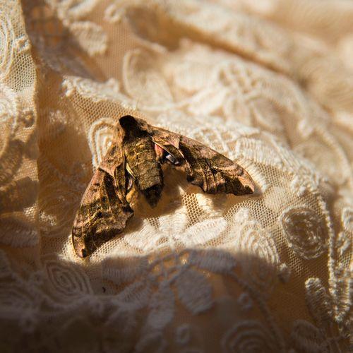 Close-Up Of Moth On Fabric