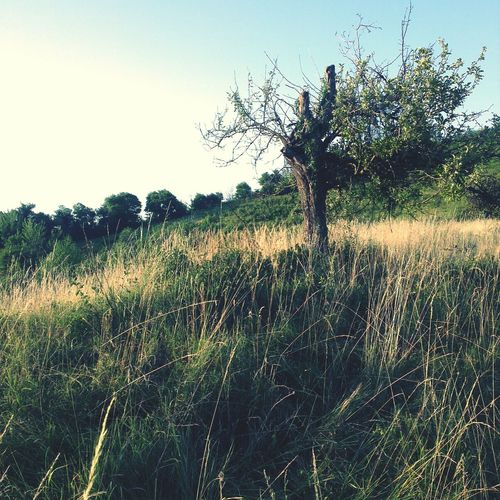 Tree. Trees Landscape Grassland Croatia