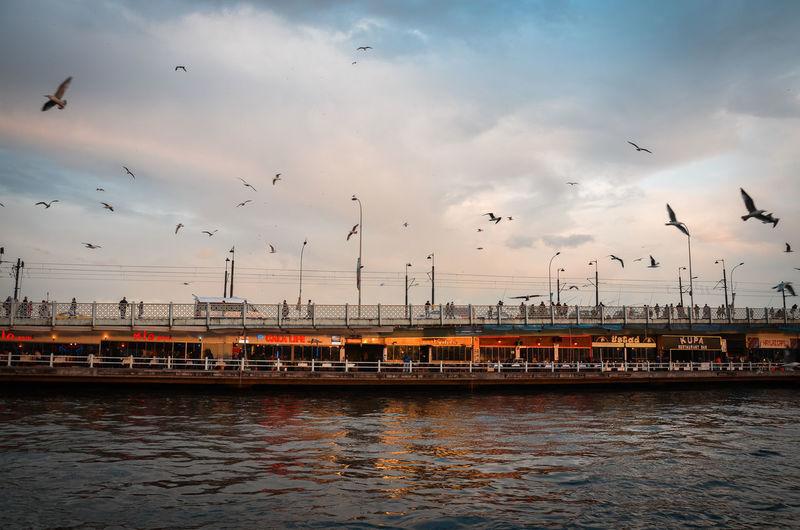 Bird Bridge Cloud Day Flying Outdoors Sky Water Istanbul Istanbul #turkiye Haliç Eminönü Karaköy Galata Köprüsü Galata Bridge First Eyeem Photo Nikon