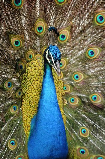 Aves Natural