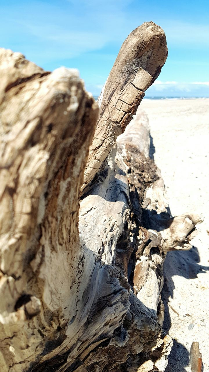 wood - material, nature, day, outdoors, tree trunk, sunlight, log, no people, arid climate, deforestation, tree stump, tree, sand, close-up, dead plant, textured, dead tree, beauty in nature, sky