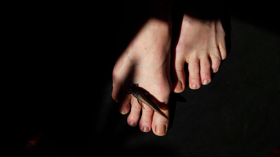 feet Grasshopper Insect Skin Details Light And Shadow Woman Portrait Part Of Body Feet Light Sunlight Shadow Nail Polish Black Background Close-up Skin Foot Finger Body Part Index Finger