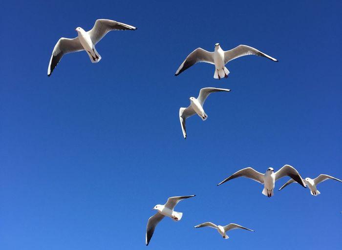 Blue Sky Bird