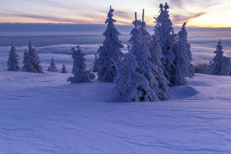 The beauty of winter on the snowy mountains at blue hour. Vladeasa Mountains - Romania Sunset Nature Beautiful Mountains Sky Landscape Tree Ice Winter Holiday Blue Snow Panorama Frozen Christmas Color Outdoors Forest Tranquility Frost Peak Europe Alpine Plant Adventure Hill Fairytale  Season  First Eyeem Photo Environment Beauty In Nature No People Backgrounds Covering Tranquil Scene Non-urban Scene Cloud - Sky Cold Temperature Powder Snow Scenics - Nature Charpatian