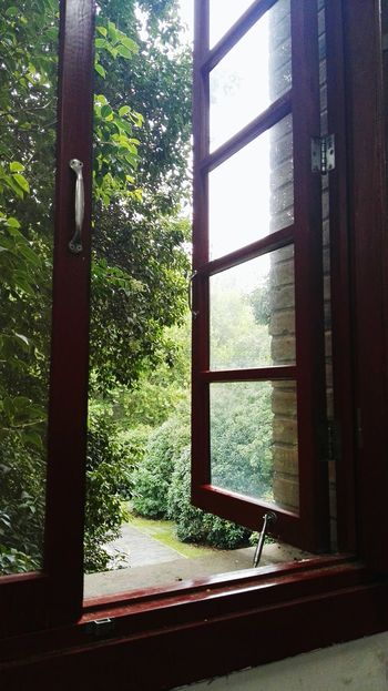 my camplus Window Tree Looking Through Window Glass - Material Indoors  Day Green Color No People Domestic Room Close-up