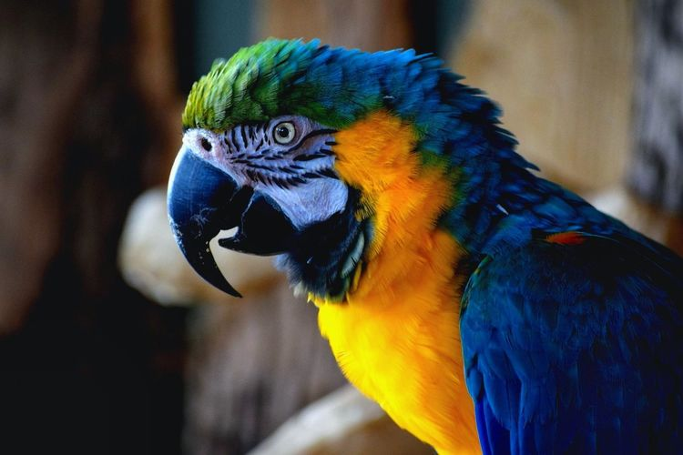 Beautiful bird Parrot Bird Macaw Multi Colored Gold And Blue Macaw Blue Animal One Animal Beak Animal Wildlife Close-up Outdoors No People Perching Nature Animal Themes Day