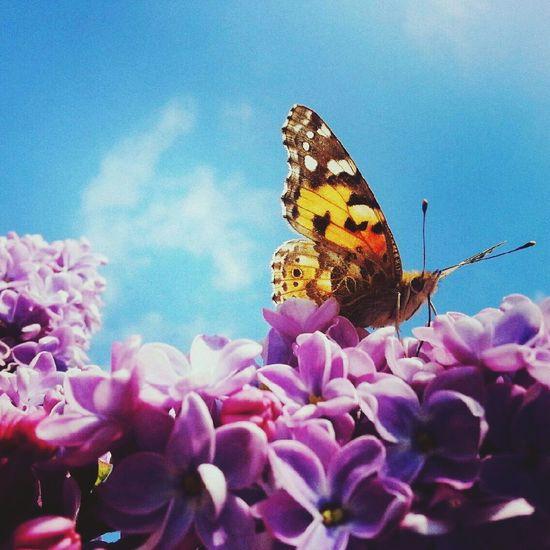 Relaxing Macro_flower Spring Flowers Flower & Butterfly First Eyeem Photo