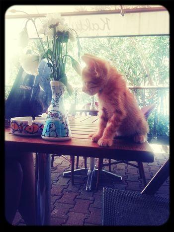 Cats Catsagram Funny Love