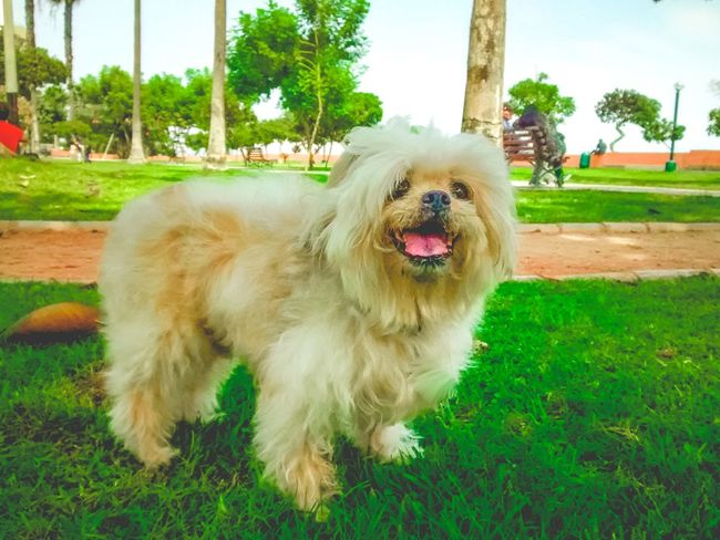 Animal Themes Dog Dog Love Dog Lovers Dogs Domestic Animals Enjoying Life Exceptional Photographs Eye4photography  EyeEm Best Shots Family Time Grass No People One Animal Outdoors Pets Photoshoot Popular Photos They Are Family