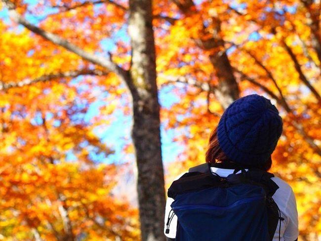 2014.10.18平瀬道 Autumn Outdoors Hiking Beauty In Nature Autumn Leaves Japan 秋 紅葉 白山 平瀬道