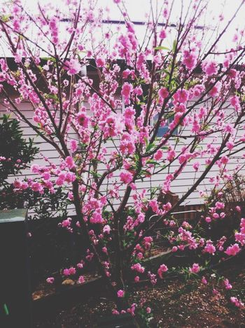 Flowers Pink Roses Nature Nature_collection EyeEm Nature Lover Vscocam