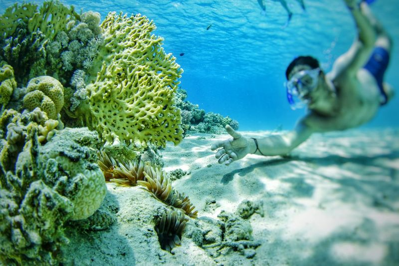 Shirtless man snorkeling by coral reef in sea