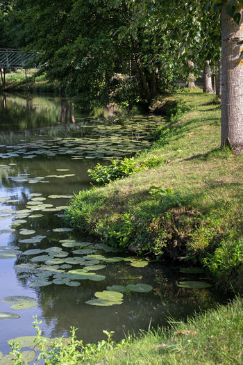 Nenuphar Riverside Beauty In Nature Day Grass Growth Lilywater Nature No People Outdoors Plant Reflection River Riverbank Tranquility Tree Water