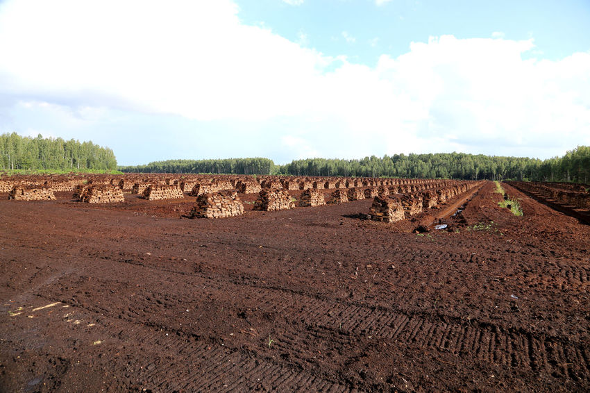 peat is stacked in rows waiting for transport in a forest in Latvia. Wald Und Torf Travelling The Baltic States Torffeld Torffabrik Torfballen Torfabbau Swamp Renewable Energy Peat Mining Peat Field Peat Extraction Peat Bog Peat Lettland  Latvia Landwirtschaft Lagerung Heating Period Harvesting Peat Fossil Fuels Fossil Fuel Evening Light Brennstoff Bog Peat Agriculture