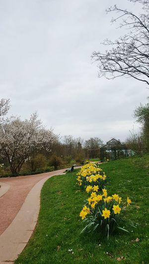 Blossom Cloud - Sky Flower Nature