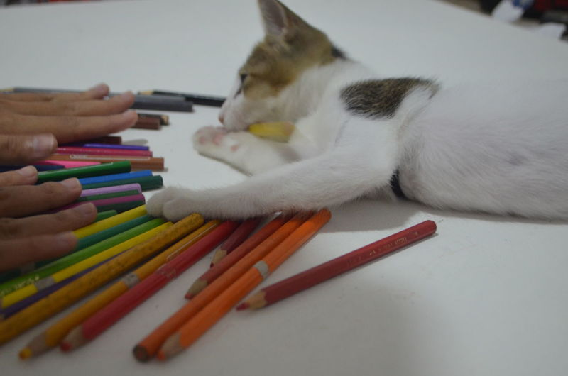 Close-up of hand touching cat with colored pencils