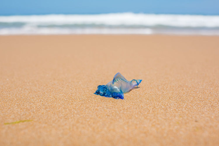 Blue bottle jellyfish or portuguese man of war on the sand with soft water wave
