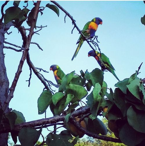 Love Lorikeets KM Wanderlust Photography Inc.