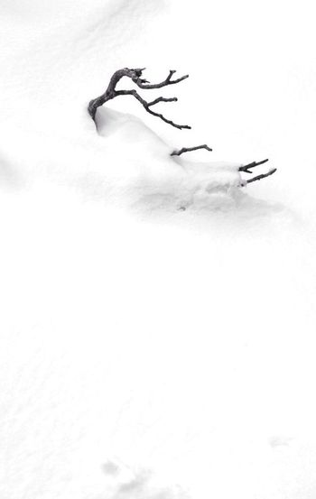 Snow Blackandwhite --- now that's all in my mind ;(