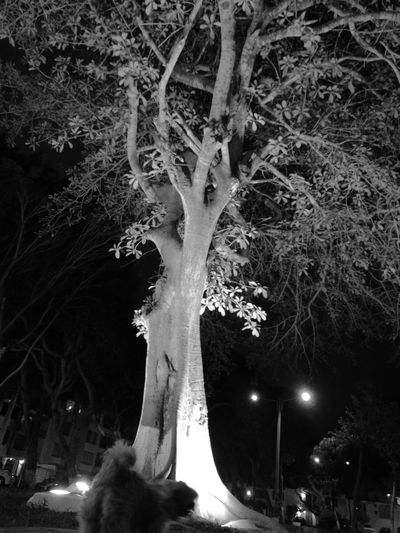 Tree Mayatraviesa Illuminated Night HuaweiP9