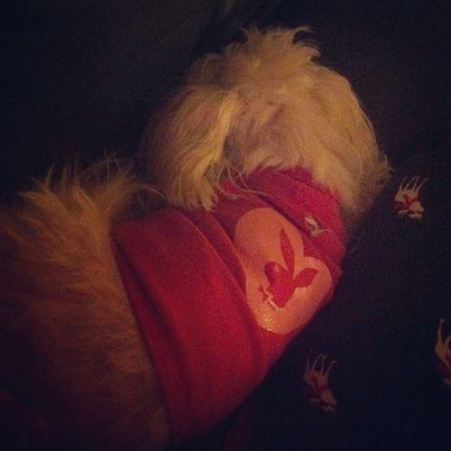 My Dog Tiffany Lol