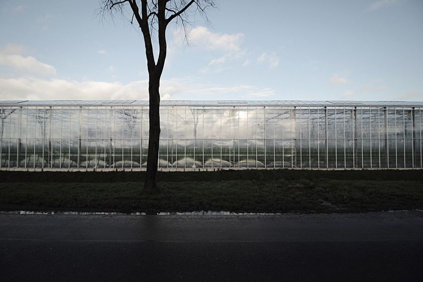 glasshouses... Eastfrisia Agriculture Glasshouse Minimal Architecture Sky Cloud - Sky Day No People Tree Nature Outdoors Greenhouse EyeEm Ready