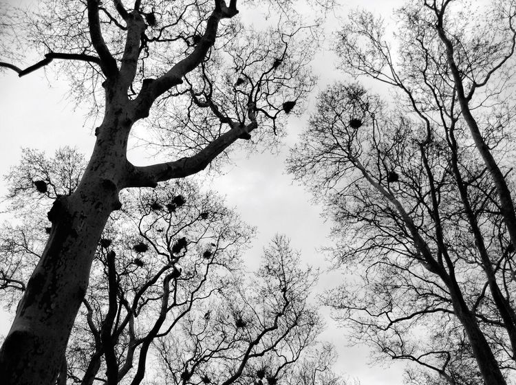 Stork nests Tree Branch Low Angle View Sky Nature Tree Trunk Bare Tree Growth No People Outdoors Beauty In Nature Day Stork Nest Gulhane Gulhane Park Gulhaneparki
