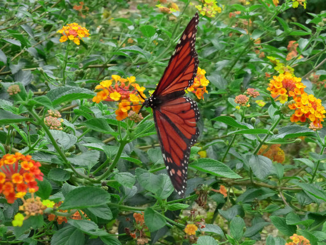 Ibiza Schmetterling Butterfly Flwers Collourfull