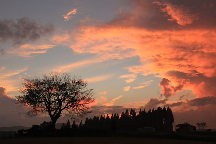 Silhouette trees on landscape against scenic sky
