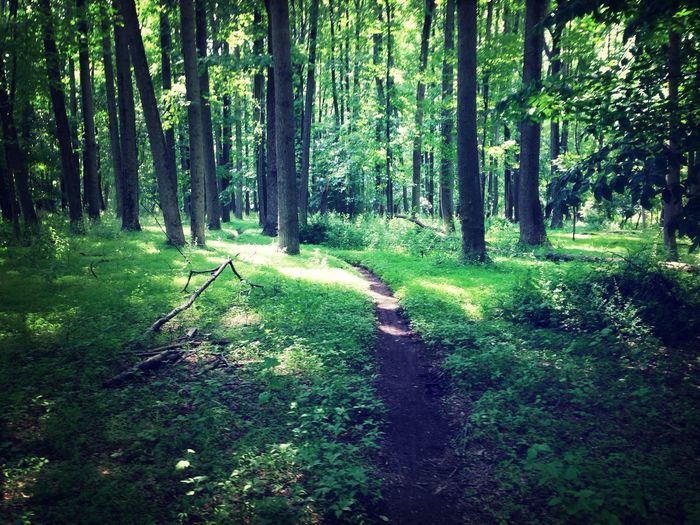 What Does Peace Look Like To You? Running Adventure