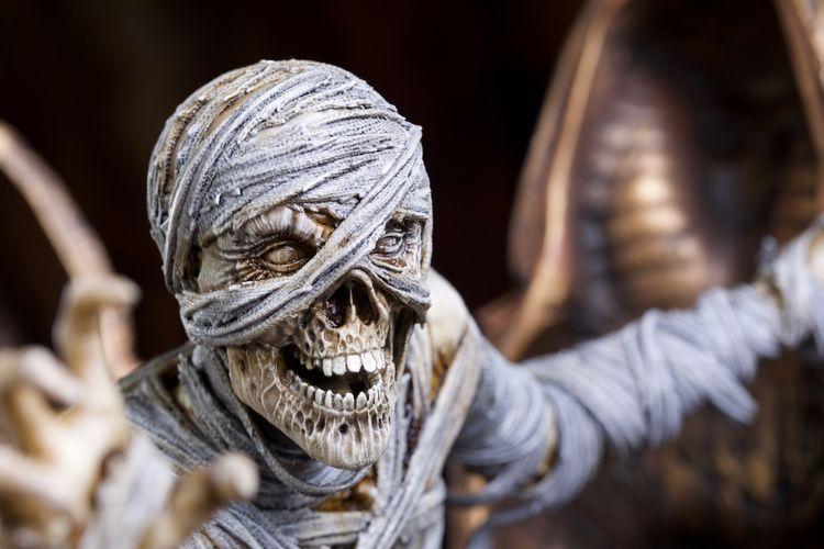 Close-up of human skeleton