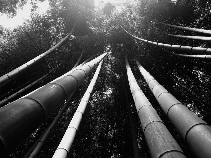 Bamboo Forest Outdoors Nature Low Angle View No People Tree Beautiful Amazing Alone For A Moment Finding The Right Angle